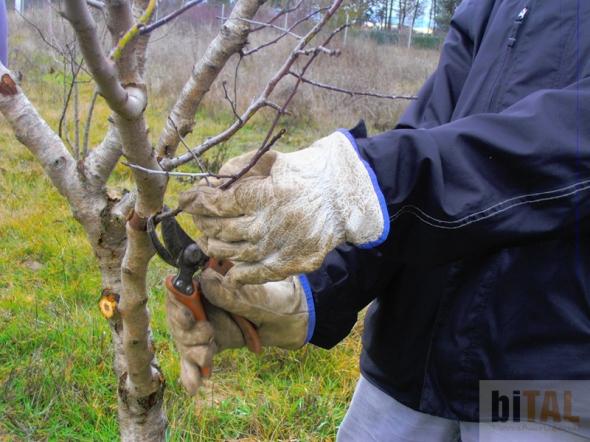 La poda para cualquier especie vegetal es una operación traumática que altera el desarrollo y morfología natural de los árboles, por lo que debe realizarse con conocimientos y delicadeza.